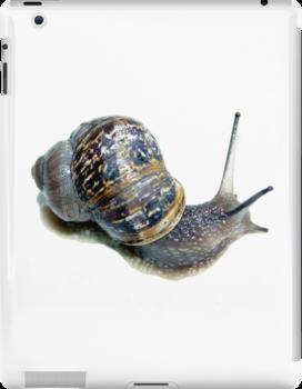 Snail by John Gaffen