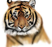 Tiger by stevencraigart