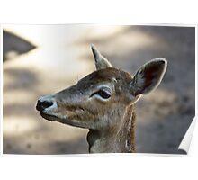 Deer l Poster