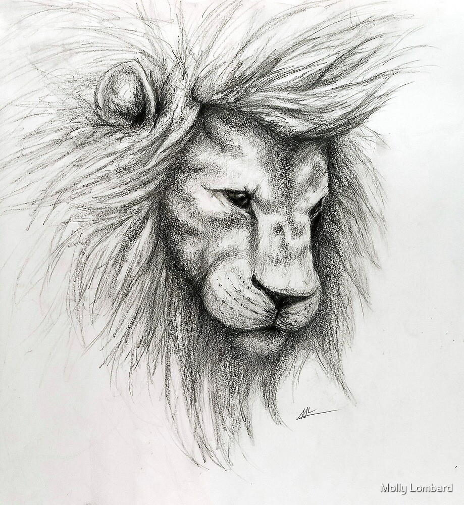 Quot Lion Pencil Sketch Quot By Molly Lombard Redbubble