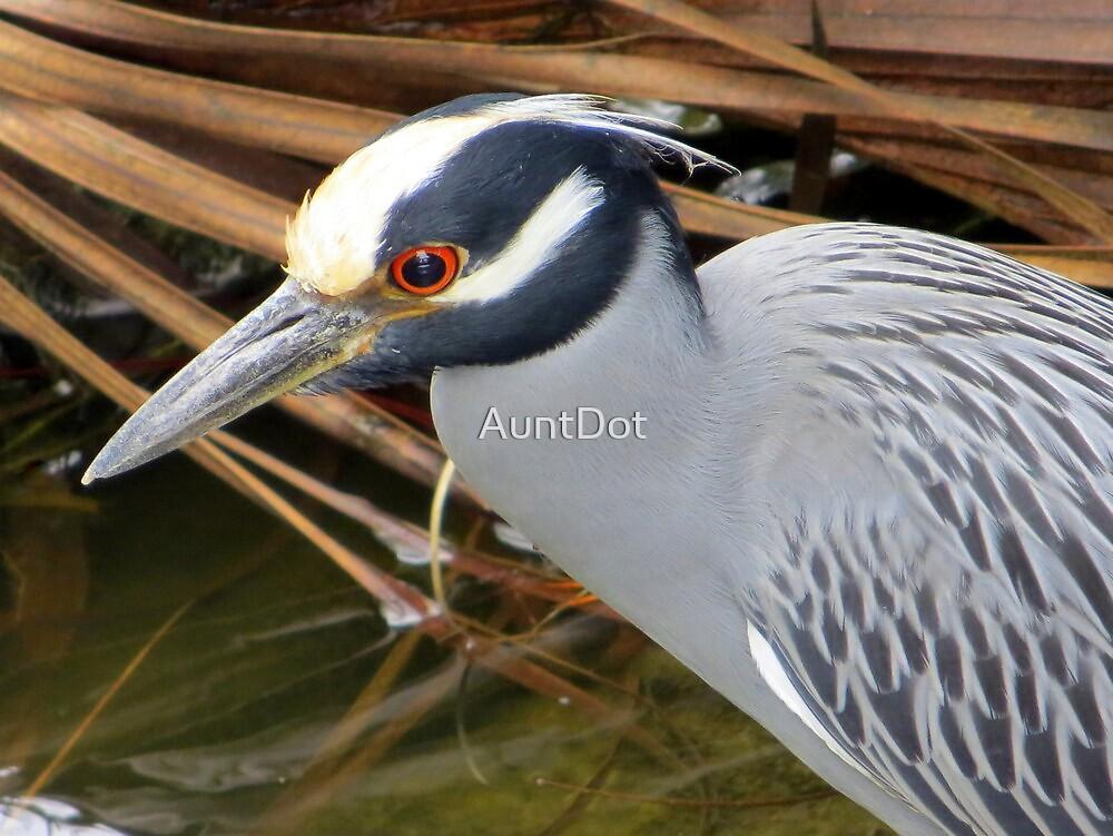 I've got my red eye on you! by AuntDot