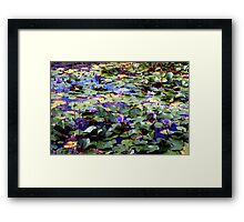 Many waterlilies Framed Print