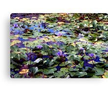 Many waterlilies Canvas Print