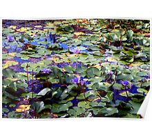Many waterlilies Poster