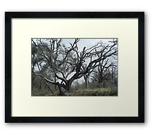 Striking View Framed Print