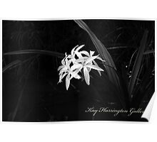 Bayou Spider Lily Poster