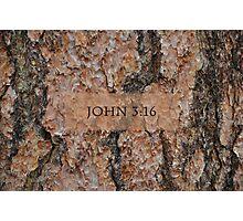 John 3:16 Tree Photographic Print