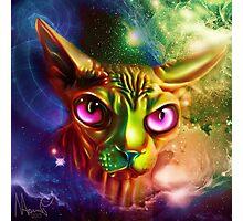 sphynx cat Photographic Print