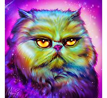 LouLou, persian cat Photographic Print