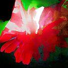 this flower was by marcwellman2000