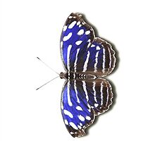 Smartphone Case - Butterfly - Royal Blue by Mark Podger