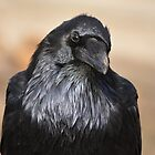 Raven Consideration by DWMMPhotography