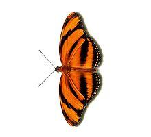Smartphone Case - Butterfly - Banded Orange by Mark Podger