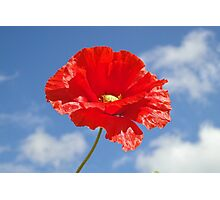 The Single Poppy Photographic Print