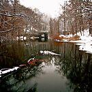 Winter in Scarsdale by Daniel Sorine
