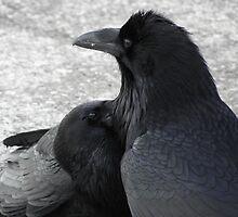 Raven Beard Exploration by DWMMPhotography