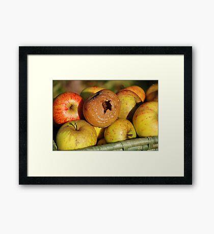 Bad apple in the basket Framed Print