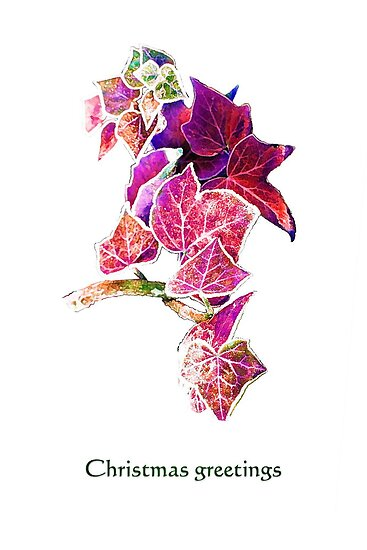 Red Ivy christmas card by Agnes McGuinness