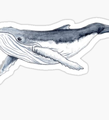 Humpback whale baby Sticker
