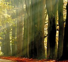 When the light plays with the trees by jchanders