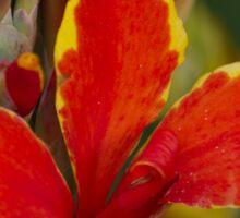 lily in spring Sticker