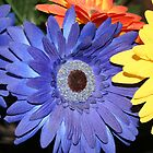 Sunflower by Somerset33