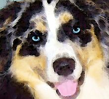 Australian Shepherd by Sharon Cummings