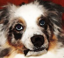 Aussie Dog Art - Loving Eyes by Sharon Cummings