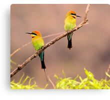 Rainbow Bee- Eaters Male and female Canvas Print