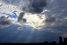 Rays Over St. Pete by AuntDot