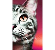 Modern Cat Art - Zebra Photographic Print
