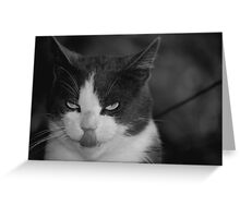 Can you touch your nose with your tongue? Greeting Card