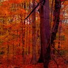 Golden Fall Forest by Lisa Taylor