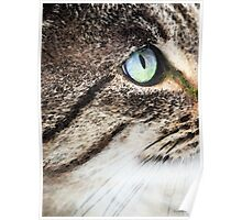 Cat Art - Looking For You Poster