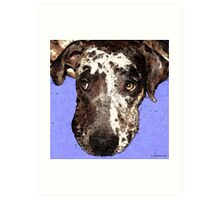 Catahoula Leopard Dog - Soulful Eyes Art Print