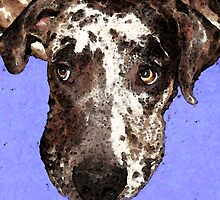 Catahoula Leopard Dog - Soulful Eyes by Sharon Cummings