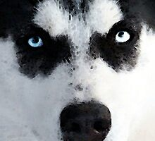 Husky Dog Art - Bat Man by Sharon Cummings