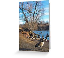 A Gaggle of Geese Greeting Card
