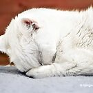 Now I lay me down to sleep by ibjennyjenny