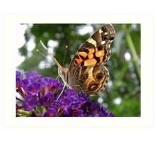 Butterfly on Butterfly Bush Art Print