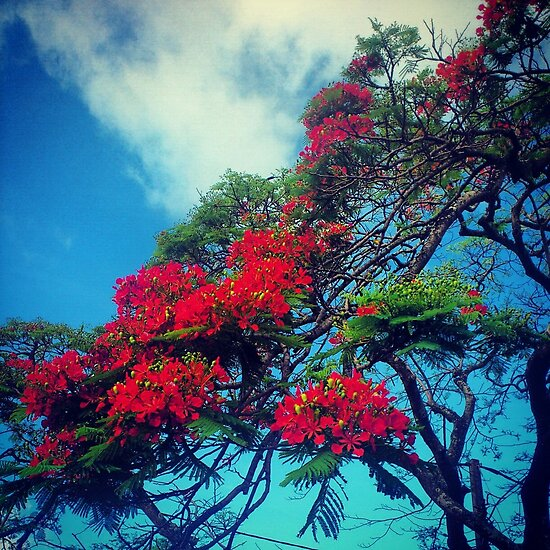 Red Blossom by tropicalsamuelv