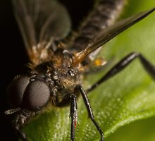 fly On A Leaf #6 by Kerrod Sulter