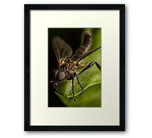 fly On A Leaf #6 Framed Print