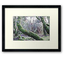 Enchanted #2 Framed Print