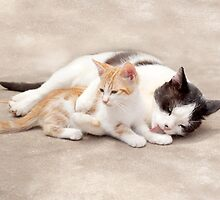 Lucky Little Paws Rescue and Adoption1 by Kimberley Gifford