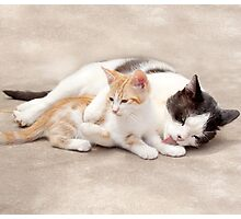 Lucky Little Paws Rescue and Adoption1 Photographic Print