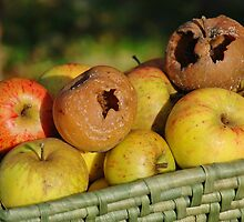Bad apples in the basket by David Fowler