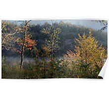 Mountain Fork Riverbank Trees Poster