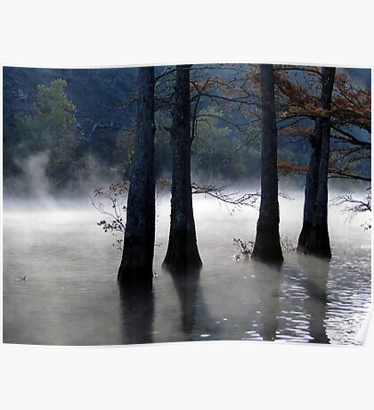 River Mist And Cypress Trees Poster