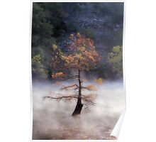 The Beauty Of A Misty Morning Poster